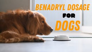 Ultimate Guide About Benadryl Dosage For Dogs