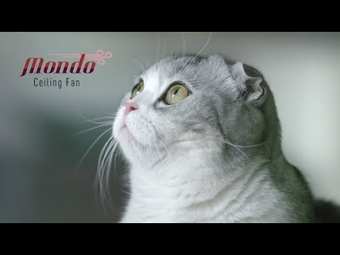 A Cool Companion For Hooman And Furriend | Panasonic Mondo Ceiling Fan