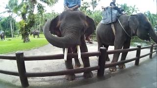 Дом в Убуде, Парк Слонов, Святые источники(Это был самый длинный день. Сначала мы решили переехать в Убуд, потом поехали в парк слонов. По пути назад..., 2017-02-18T13:09:25.000Z)