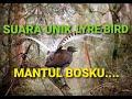 Audio Masteran Burung Lyre Bird Dan Gemercik Air  Mp3 - Mp4 Download