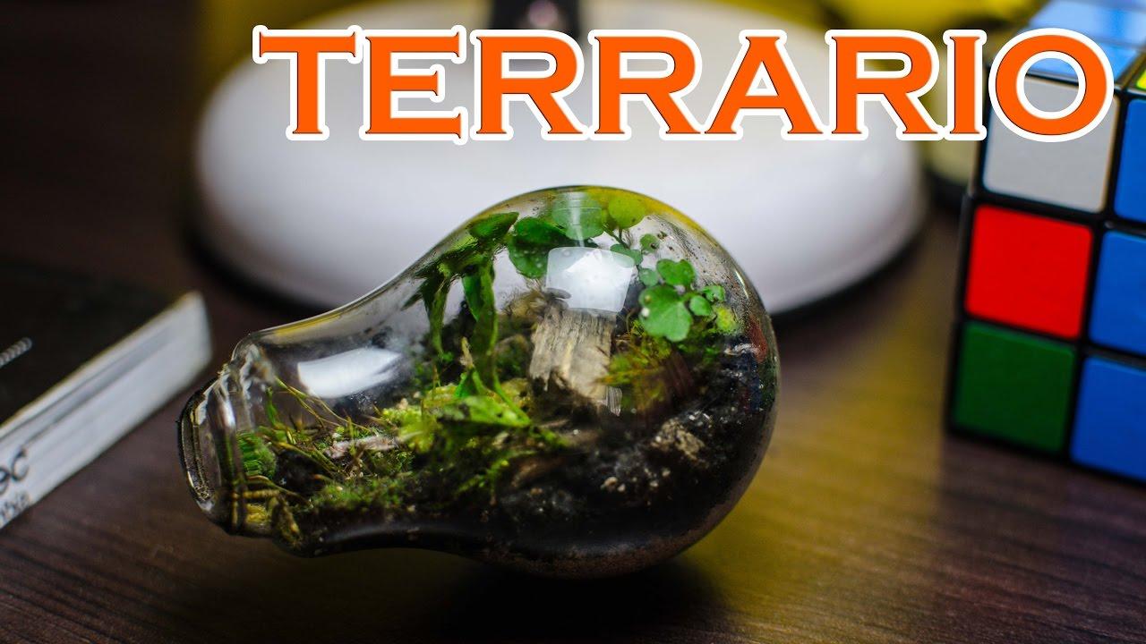 Como hacer un terrario con una bombilla de cristal youtube - Como crear un jardin ...