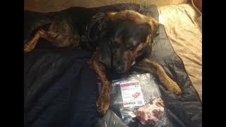 "BB Enjoys A Recreational ""Beef Neck Bone Chunks"" By ""Tollden Farms Natural Pet Nutrition""- Part 1 thumbnail"