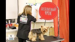 Профессия грумер. Кто стрижет собак? Обучение грумингу и трудоустройство