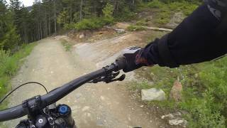 Meeting a bear @ Crank it Up trail, Whistler bike park, Canada