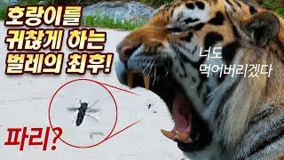 벌레도 피해 갈 수 없는 호랑이의 본능!