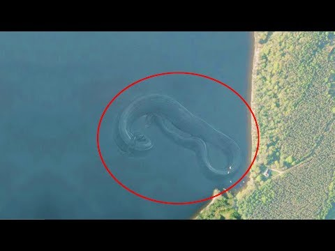 7 Mysterious Deep Sea Creatures Spotted On Google Earth