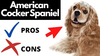 American Cocker Spaniel Pros And Cons | The Good AND The Bad!!