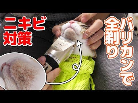 猫ニキビ対策にアゴ毛をバリカンで全剃り!剃ったアゴを見たい飼い主と隠したい猫w