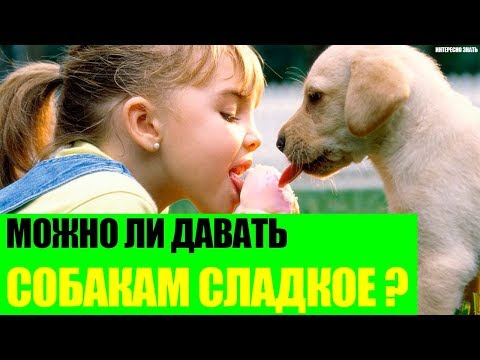 Можно ли давать собакам сладкое?