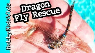 HUGE Dragon Fly Rescue! Drowning Dragon Fly Gets A Boost From HobbyPapa HobbyKidsVids