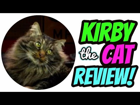 Maine Coon Cat Review - Kirby