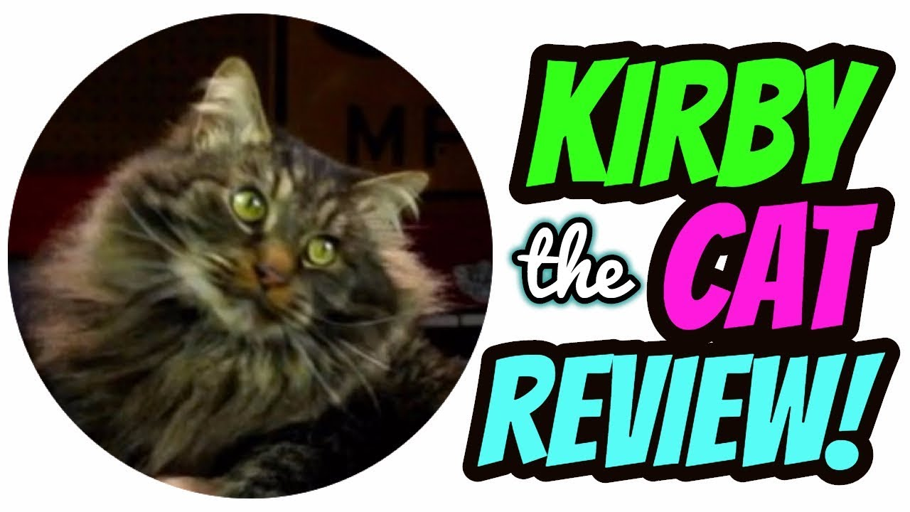 Maine Coon Cat Breed Review - Kirby - YouTube