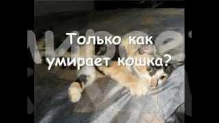 Как умирают кошки??