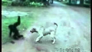 New Kokborok video tulshiram killa Udaipur Tripura
