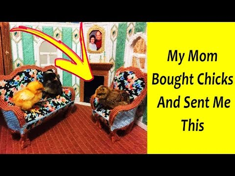 Moms Made Us Laugh By Doing The Mommiest Things Ever 「 funny photos 」