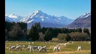 Эмиграция в Новую Зеландию