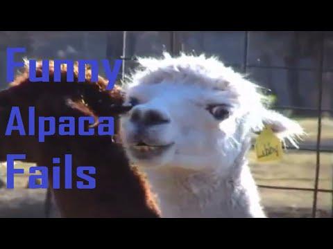 Funny Alpaca Fails    EpicFail