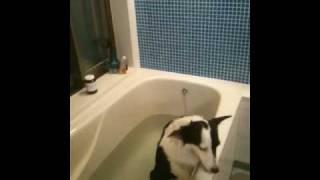 お風呂から、脱走しようとして、なんとかするうちに くるくる回り出して...