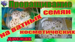 Проращивание семян на ватных косметических дисках в домашних условиях(Сегодня я Вам покажу проращивание семян в ватных косметических дисках в домашних условиях. Продолжаю расск..., 2014-12-04T18:34:36.000Z)