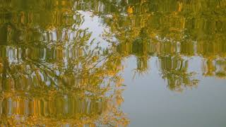 Trees Yellow Leaves Water Reflection And waves