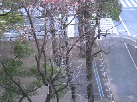 Андрей Викторов - Утро в Японии, вид с моего балкона