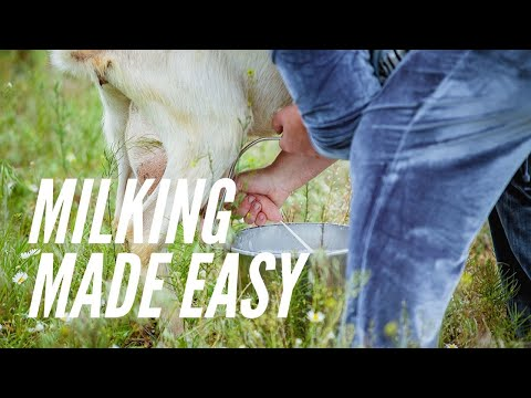 How To Milk A Goat
