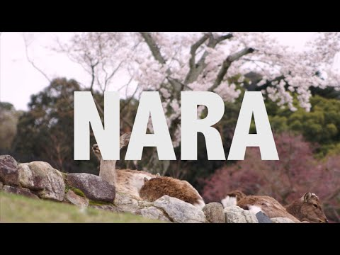 JAPAN IS AWESOME -- NARA