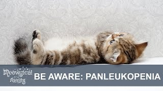 Hellish PANLEUKOPENIA: feline distemper