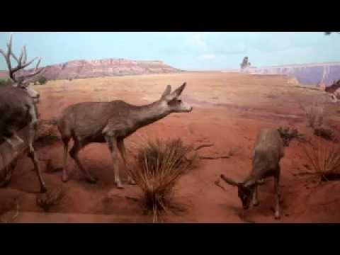 Yale Peabody Museum of Natural History Tour