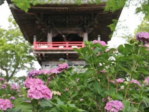 武蔵野の初夏 能護寺あじさい寺と妻沼聖天山