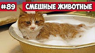 Смешные животные - кот в ванной | Bazuzu Video ТОП подборка 89, январь 2018