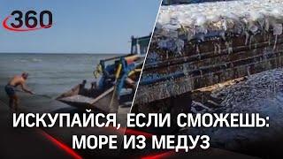 Мёртвых медуз тоннами вывозят самосвалы с пляжей Азовского моря. Видео с пляжей