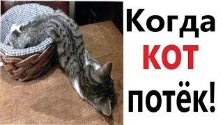 Приколы с котами - КОГДА КОТ ПОТЁК СМЕШНЫЕ ЖИВОТНЫЕ Попробуй не ЗАСМЕЯТЬСЯ – Domi Show