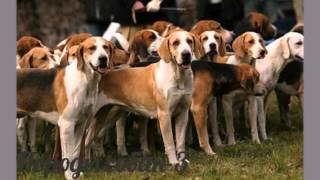 Породы собак- 3 часть   Собаки фото