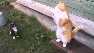 Русские коты ))