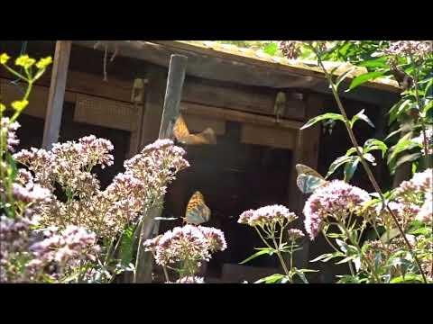 Die besten Schmetterlingspflanzen