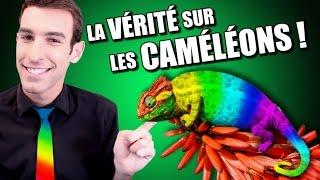 IDÉE REÇUE #14 : La couleur des caméléons