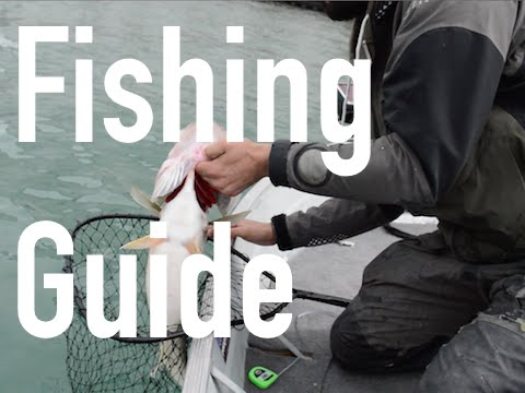 The Fishing Guide Chronicles