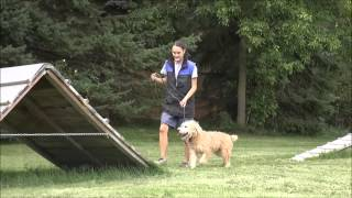 Fozzie (irish Wheaten Terrier) Boot Camp Dog Training Video