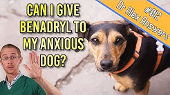Can You Give Benadryl to a Dog for Anxiety Treatment? - Dog Health Vet Advice