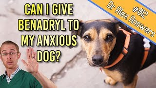 Can You Give Benadryl to a Dog for Anxiety Treatment?