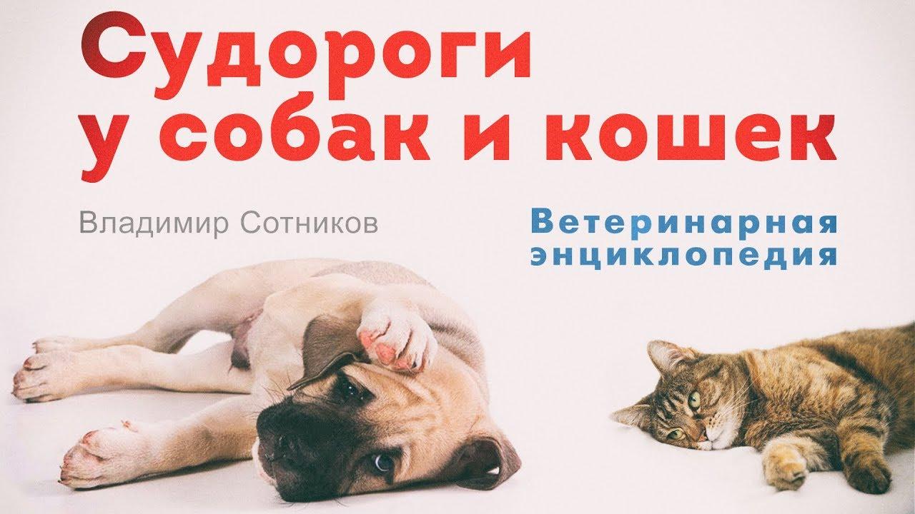 Судороги у собак и кошек - YouTube
