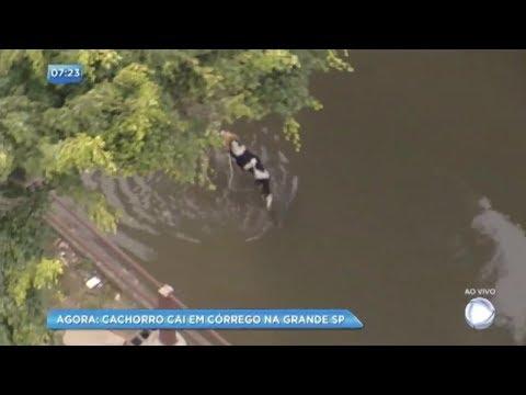 Balanço Geral flagra resgate de cão em córrego em Taboão da Serra (SP)