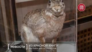Выставка животных и растений из Красной книги (05.07.2016)