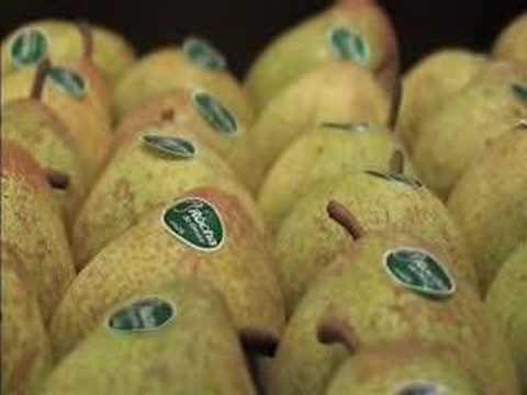 Pêra Rocha do Oeste - Fruta Viva - Portugal