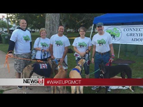 CT Greyhound Adoption