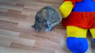 Скотч на хвосте кошки