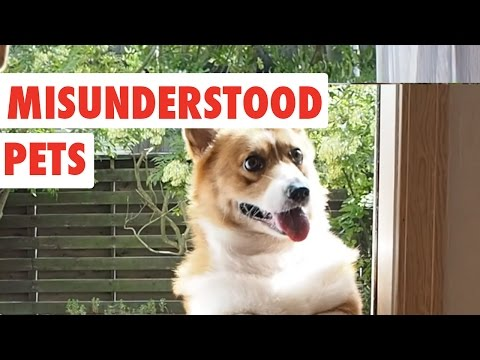 Misunderstood Pets | Funny Pet Video Compilation 2017