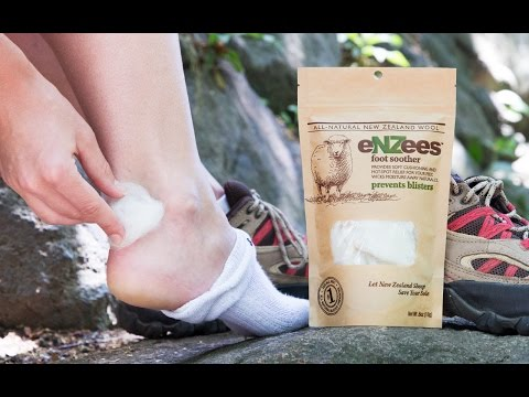 New Zealand lambs singlehandedly preventing blisters.
