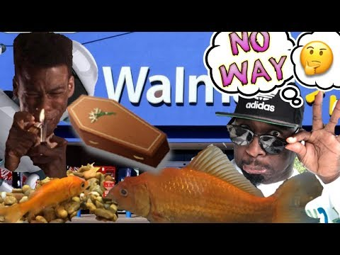 b2072b22837b Don t buy goldfish fish from Walmart....EVEEEERE!! Here s why ...